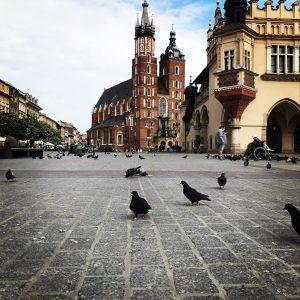 Krakowskie gołębie.